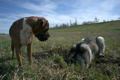 户外步行与狗 免版税库存图片
