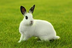 户外白色小兔在草 库存照片