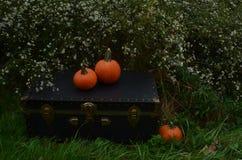 户外秋天pumkins在葡萄酒树干的庭院里 免版税库存图片