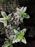 户外绿色植物 免版税图库摄影