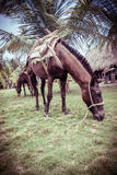 户外美丽的马在一个热带森林里 免版税库存图片