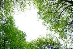 户外美好的春天早晨 免版税库存图片