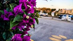 户外自然花拍摄 免版税库存图片