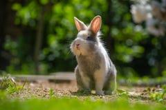 户外逗人喜爱的兔子 免版税库存图片