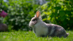 户外逗人喜爱的蓬松兔子在夏天(16:9长宽比) 免版税库存照片