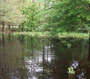 户外,树,水,洪水,草,围场,路, 库存图片