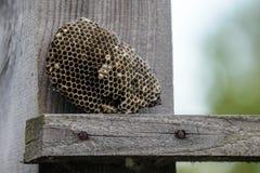 户外黄蜂巢 库存图片