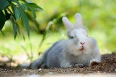 户外说谎在地面上的逗人喜爱的滑稽的兔子 免版税库存照片