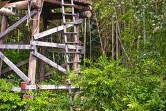 房子密林结构树 免版税库存照片
