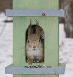 房子小的灰鼠 免版税库存图片