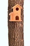 房子查出的现代starling的树干 图库摄影