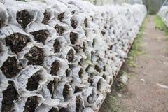 房子查出的蘑菇wtite 免版税库存照片