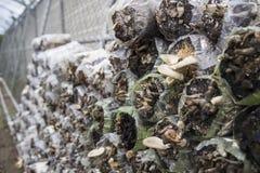 房子查出的蘑菇wtite 免版税图库摄影