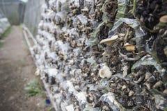 房子查出的蘑菇wtite 免版税库存图片
