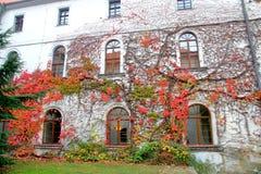 房子的墙壁长满用在一个红色秋天范围的狂放的葡萄 图库摄影
