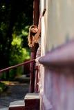 房子的门道入口的俏丽的妇女 免版税库存图片