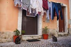 房子的门面有门和猫的 免版税库存照片