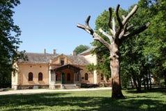 房子结构树 免版税图库摄影