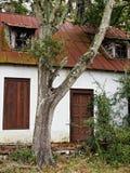 房子老结构树垂直 库存照片