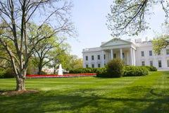 房子草坪白色 免版税库存图片