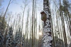 房子starling的冬天 免版税图库摄影