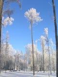 所以我爱冬天! 免版税图库摄影