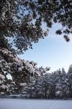 所有专家的冬天橄榄球 库存图片