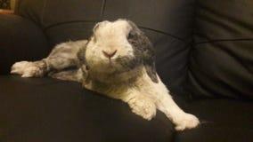 所有变冷的兔子  免版税库存照片