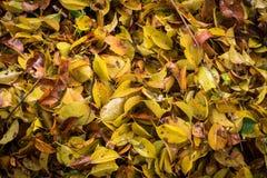 所有叶子秋天 免版税库存图片