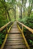 所有图画密林横向掌上型计算机铅笔结构树 在有薄雾的热带雨林的木桥 免版税库存图片