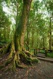 所有图画密林横向掌上型计算机铅笔结构树 有大树的室外公园在热带雨林根源 免版税图库摄影
