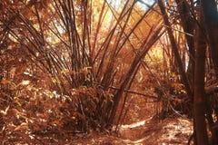 所有图画密林横向掌上型计算机铅笔结构树 免版税库存图片