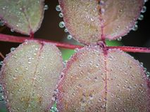所有圈子雨水在叶子罗斯滴下 库存照片