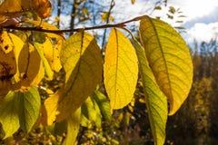 所有所有秋天背景要素花卉例证各自的对象称范围纹理导航 图库摄影