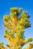 所有所有秋天背景要素花卉例证各自的对象称范围纹理导航 库存图片