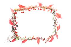 所有所有秋天背景要素花卉例证各自的对象称范围纹理导航 免版税库存照片