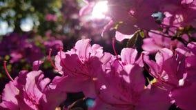 所有粉红色 库存照片