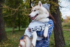 所有者和狗之间的关系 妇女拿着爱斯基摩 免版税库存照片
