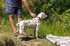 所有者教狗得到宠物寻找 人们和动物本质上 免版税库存图片