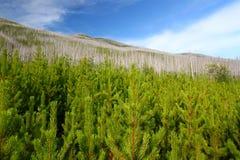 扁平头的森林蒙大拿国民 库存照片