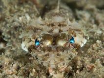 扁平头的鳄鱼鱼 免版税库存图片