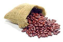 扁豆。 图库摄影