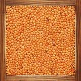 扁豆 库存图片