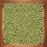 扁豆 免版税库存照片