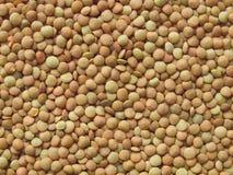 扁豆 免版税库存图片