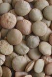 扁豆 免版税图库摄影