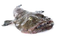 扁鲨 免版税库存图片