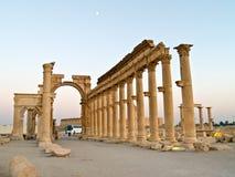 扇叶树头榈叙利亚 免版税库存图片