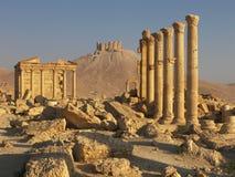 扇叶树头榈叙利亚 免版税库存照片