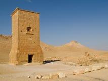 扇叶树头榈,叙利亚古老废墟  库存图片